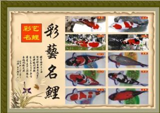 锦鲤招牌图片