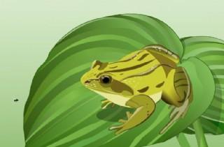 青蛙吃虫子flash