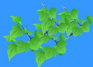 桑叶flash植物